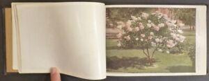 1920s Garden Nursery Illustrated Flower & Shrubbery Catalog (New York Printer)