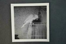 Vintage Photo Parrot on Bird Cage 963031