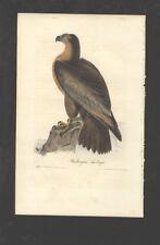Original Audubon Litho 1st Octavo Birds of America - Washington Sea Eagle