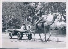 1954 Men Ride Camel Pulled Cart Delhi India Press Photo