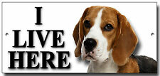 "BEAGLE ""I LIVE HERE"" METAL SIGN,DOG BREEDS,SECURITY,WARNING.PERSONALISED."