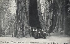 The Auto Tree , Dia. 21 feet, Redwood Park, California, 1908