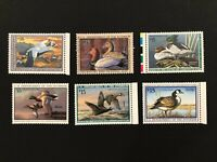 Mint Duck Stamp Collection (RW59-RW64) 6 Mint NH +Extras