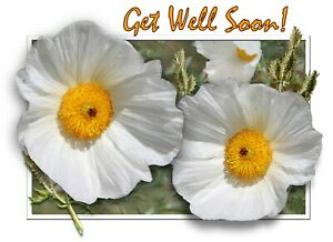 """NEW!    """"GET WELL SOON!""""  - WHITE THISTLE FLOWERS  - 8 NOTE CARDS w/Envelopes"""