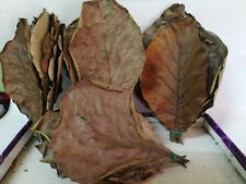 100 g TEAK TREE LEAF(Tectona grandis) BIO FILM SHRIMP BETTAS FISH AQUA HEALTH