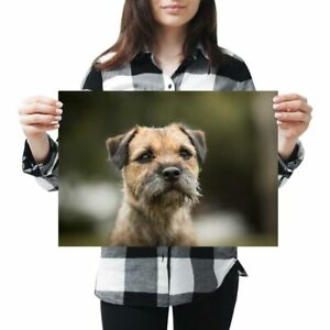 A3 - Brown Border Terrier Dog Puppy Poster 42X29.7cm280gsm #15940