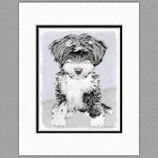 Tibetan Terrier Puppy Dog Original Art Print 8x10 Matted to 11x14