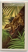 Madagascar Lemur Night Tree Mammals Vintage Trade Ad Card