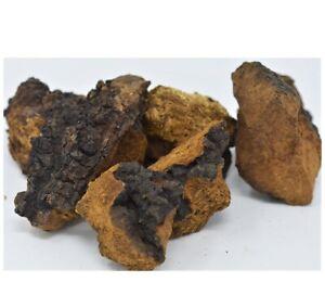 Northern Minnesota CHAGA chunks - 1 LB PREMIUM MUSHROOM TEA ORGANIC