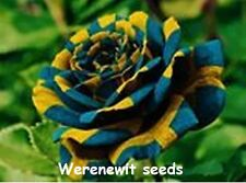 20 x NEW EXTREMELY RARE EXOTIC BLUE-GOLDEN YELLOW STRIPED ROSE SEEDS,FREE POST