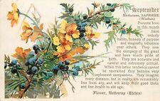 Vintage Postcard; September Birth Flower Buttercup Birthstone Sapphire Horoscope