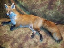 Gorgeous Red Fox Mantle Mount Taxidermy Texas Hunt Deer Antlers Traps Log Cabin