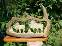 2 bAD mOOsE!! cArViNg... a very large artistic natural moose antler, great color