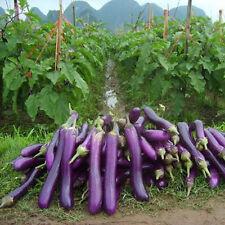 15x Riesen Lila Aubergine Samen Saatgut Garten Pflanze Gemüse essbar Neu #275