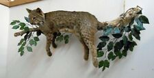 Bobcat Taxidermy Mount onTree Branch Fox Coyote Wolf Hunting Camp Log Home
