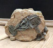 Medium Fossil Prehistoric Trilobite Fish Rock Cave Aquarium Fish Tank Ornament