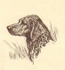 Curly Coated Retriever - Vintage Dog Print - 1954 Megargee