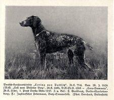 Tedesco-breve capelli femmina Corina di puttlitz Beetz-Sommerfeld MIATA 1937
