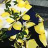 Satin + cotton Fabric Lemon Printed Poplin for Sewing DIY Craft Clothing Fabric