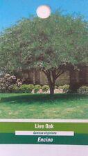 4'-5' Live Oak Tree Healthy Shade Trees Home Garden Landscape Large Plant Plants