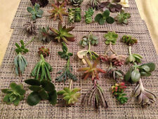 40 Succulent Cuttings / 25 Different Varietals! Great For Succulent Design