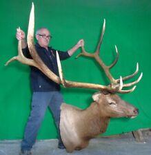 New Elk Taxidermy Head, Very Large Canadian Bull!#S1 Deer Antler Chandelier