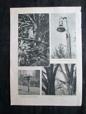 Nido per cencie, picchio, pettirosso, codirosso, storno Stampa del 1930