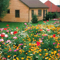 Shade Tolerant Wildflowers Mix Seed 200 Seeds Colorful Flower Garden Plants K005