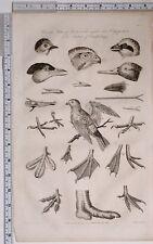 1795 ORIGINALE STAMPA ORNITOLOGIA BIRDS VARI piedi palmato Beaks