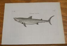 1776 Antique Fish Print///BASKING SHARK