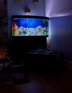 4ft Juwel Fish Tank