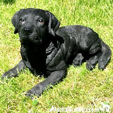 More details for large 38cm realistic black labrador garden ornament sculpture memorial dog lover