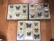 D15 GEOWORLD collezione di 24 farfalle IN TECA