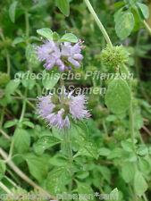 polei-minze 50 graines Plante médicinale précieuse Heilpflanze herbes mentha