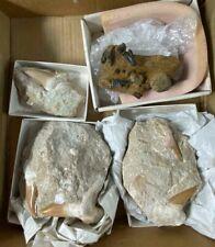 Extinct Fossil Shark Teeth in Matrix BOX LOT + USA Shark Carolina, Teeth block
