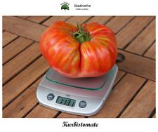 Tomate de Calabaza - kurbistomate - 25 semillas - seeds - BIO