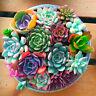 2 Bag *100pc Succulent Seeds Lithops Rare Living Stones Plants Cactus Home Plant