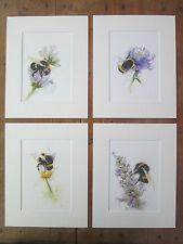 """bee  prints set of 4, prints of original paintings, in 10"""" x 8"""" Mounts"""