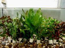 10 Bund Aquarienpflanzen Wasserpflanzen verschiedene