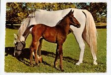 D4326cgt Animals Horse Mare & Foal Stansbury greetings Kruger postcard