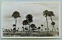 A Florida Landscape Palm Trees Real Photo Postcard RPPC 4607