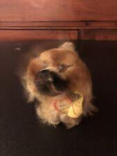 Antique Vintage Steiff Peky Pekingese Dog Mohair 3.5� Swivel Head Id Excellent!