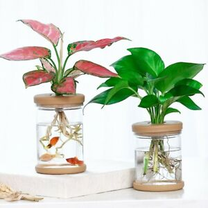 2pcs Water-absorbing Flowerpots Imitating Glass Soilless Planting Potted Plants