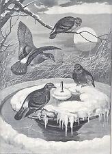 PIGEON BIRDS GATHERED AT FROZEN  FOUNTAIN ANTIQUE PRINT