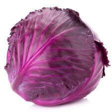 300+Seeds Red Acre Cabbage(Brassica Oleracea) Non-GMO Fresh Garden Vegetable USA