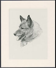 More details for norwegian elkhound old dog head study print 1935 by c.f. wardle ready mounted