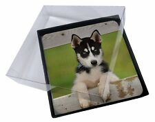 4x Husky Puppy Dog Picture Table Coasters Set in Gift Box, AD-H67C