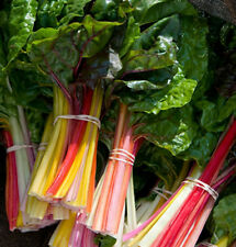 CHARD Rainbow. ORGANIC SEED. Steam or use as babyleaf in salads. Long harvest.