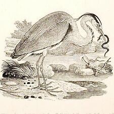 Thomas Bewick The Heron Print Cherryburn Edition 1970 Print 33