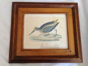 Vintage Italian Wooden Frame with Hand Coloured Print of a Jack Snipe